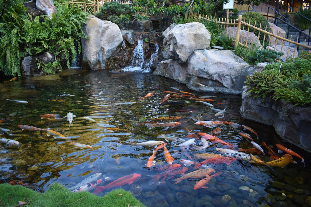 Tips on choosing the right pond supplies for Koi pond maintenance near me