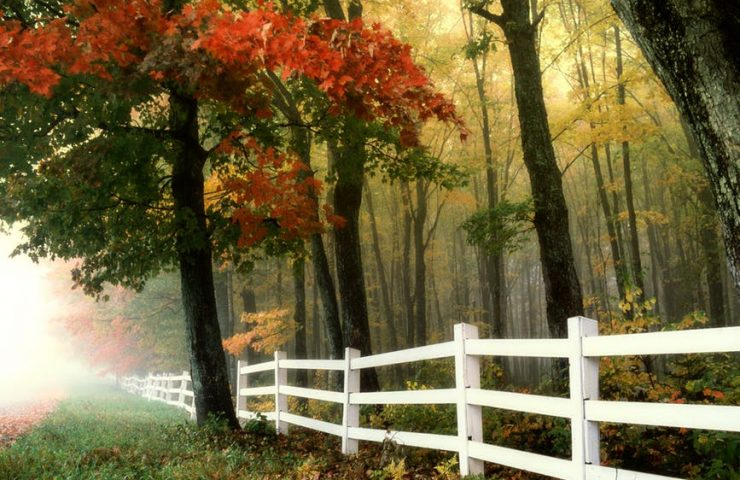 4 Reasons to Consider Horizontal Timber Fencing